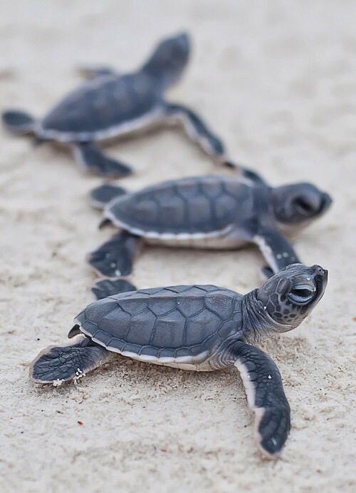Les tortues (s'orienter)